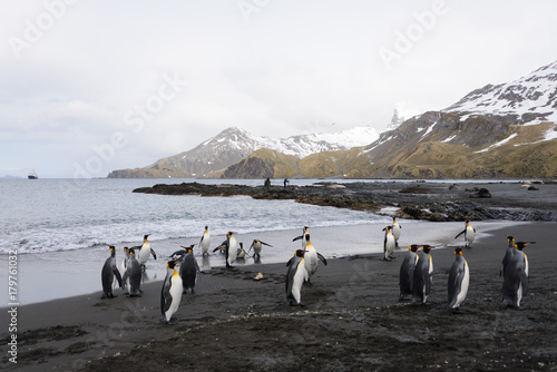 Fotobehang Antarctica South Georgia landscape with king penguins
