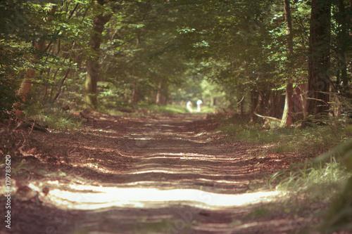 Aluminium Weg in bos Promenade en sous-bois
