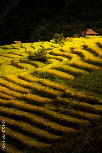 Papiers peints Les champs de riz Rice Terrace, Chiang Mai, Thailand