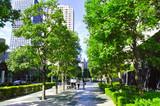 東京 木漏れ日のオフィス街(人物あり)