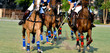 In a Polo Game - 179790462