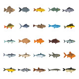 Fish icons set. Flat collection of fish vector icons for web isolated on white background