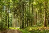 Forstweg in einem Wald - 179816475