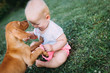 Portrait of cute baby playing with dog