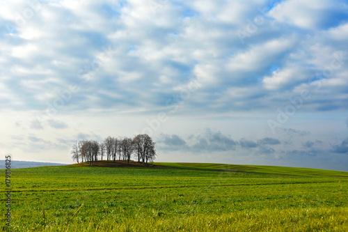 Fotobehang Lente Island of autumn trees in a green field
