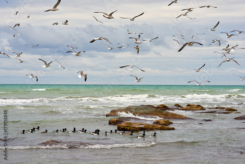 Plakat Birds of the sea. Seabirds are birds that are adapted to life within the marine environment.