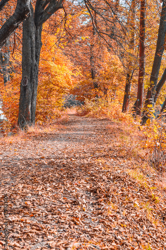 Foto op Plexiglas Herfst Autumn journey