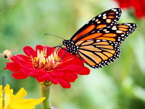 Aluminium Vlinder Butterflies: Monarch, Painted Lady, Cabbage White