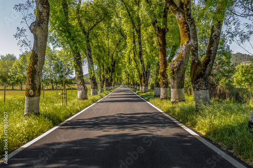 Fotobehang Zwart highway in perspective surrounded with trees inside Portugal.