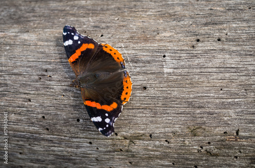 Poster Vlinders in Grunge Butterfly on the wooden board during sunny day, Vanessa atalanta