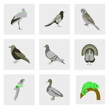 Set of vector illustration in flat style birds