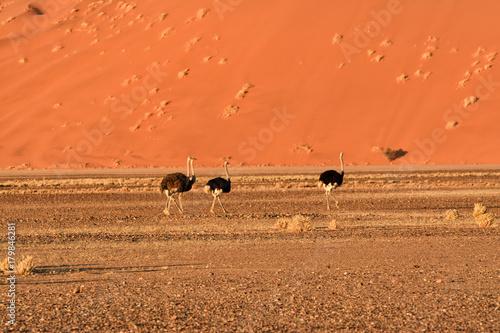In de dag Oranje eclat Namib desert