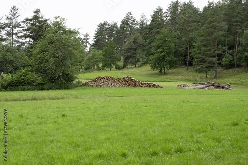 Foto op Plexiglas Pistache Landschaft mit Holzstapel