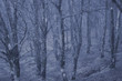 Misty forest in winter