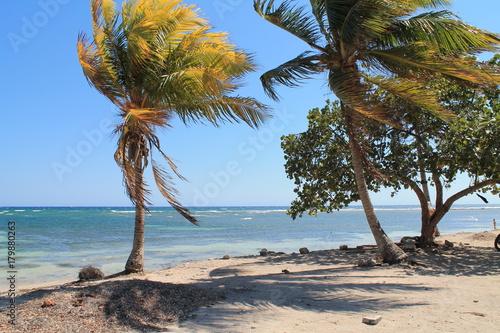 Fotobehang Tropical strand Cuban palmtree