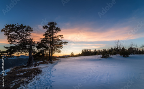 Fotobehang Nachtblauw Winter forest