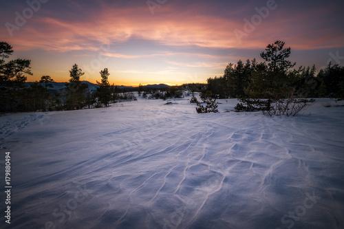 Staande foto Lavendel Winter shapes