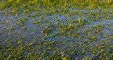 A waterlogged green grass pitch field, stopping the game being played - 179883451