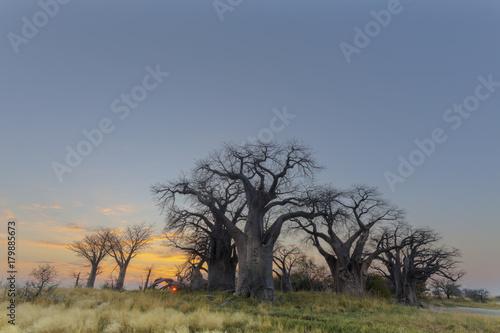 Papiers peints Baobab Sunrise at Baines Baobab's