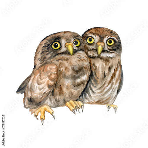 Aluminium Uilen cartoon Owls. Owlet are hugging. Lovely chicks isolated on white background. Watercolor. Illustration. Picture.