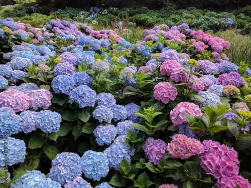 Aluminium Hydrangea Hydrangea flowers