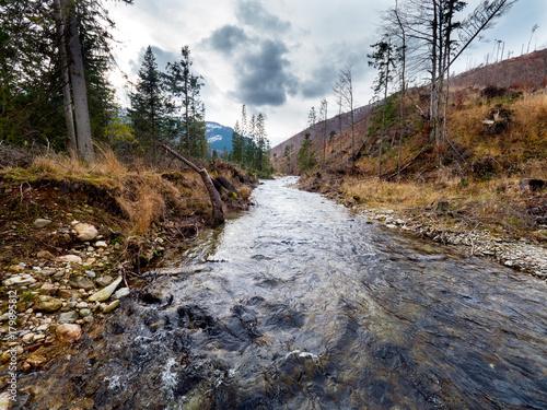 Fotobehang Weg in bos Ginące górskie lasy świerkowe w Tatrach