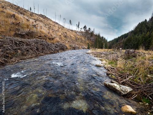 Fotobehang Bergrivier Ginące górskie lasy świerkowe w Tatrach
