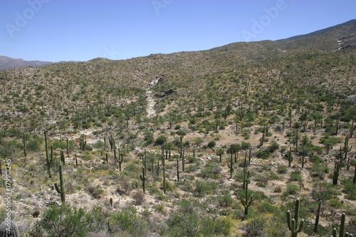 Fotobehang Grijs Arizona Desert 33
