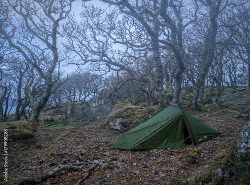 Fotobehang Betoverde Bos Wild camping in haunted woods