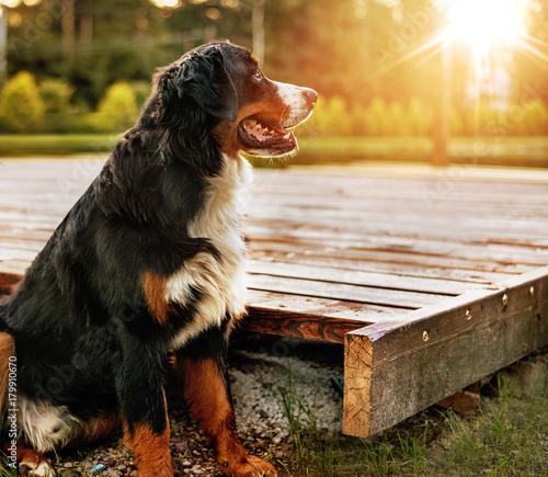 Foto op Canvas Artist KB Portrait of a calm friendly dog in the garden