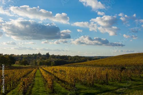Plagát France, Gironde, Capian, Les couleurs de l'automne dans les vignes