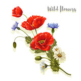 Composition with poppies and chamomiles. Vector illustration. - 179911425