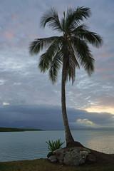 Sunset over palm trees in Port Douglas, Australia