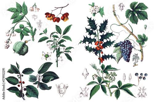 Illustrations of plants. - 179932291
