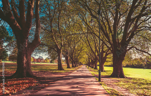 Aluminium Herfst autumn landscape on the park. autumn background