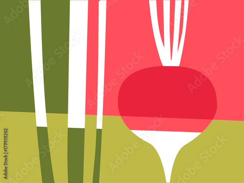 Abstract vegetable design in flat cut out style. Red and pink radish and stems. Vector illustration. - 179938262