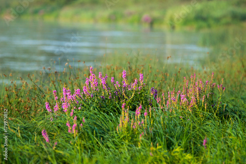 Foto op Canvas Groene Calm river with forest on the other bank