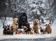 Many different breeds of dogs under the snow