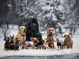 Many different breeds of dogs under the snow - 179975615