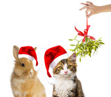 cute little long haired maine cat and rabbit with santa cap - 179976449