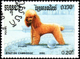 CAMBODIA - CIRCA 1990: postage stamp, printed in Cambodia, shows a Poodle dog - 179983826
