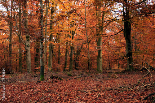 Poster Oranje eclat Wald