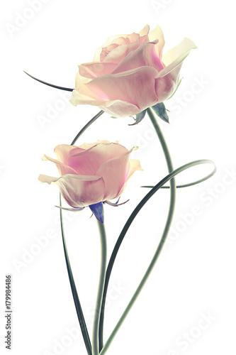 różowe kwiaty na białym tle efekt vintage