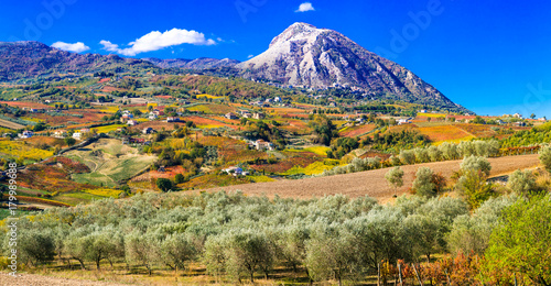 Fotobehang Freesurf Colorful fields of vineayrds and olives trees in Benevento province, Italy