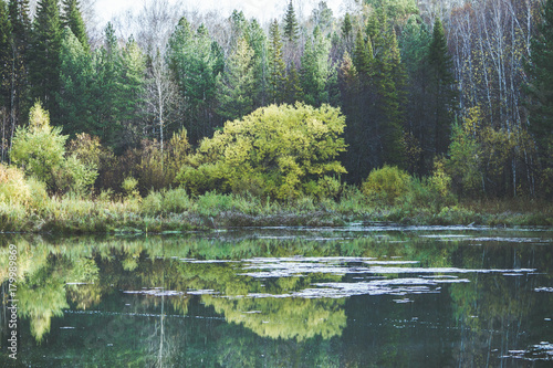 Fotobehang Pistache Beautiful pond with clear water in the forest