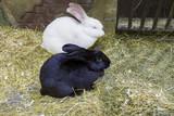 пара кроликов - 179993456