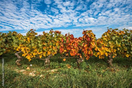 Papiers peints Vignoble Vineyards in the autumn season, Burgundy, France