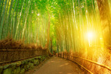 Bamboo grove at Sagano in Arashiyama in surreal sunlit. The forest is Kyoto's second most popular tourist destination and among the 100 phonetic stations in Japan. Meditative listening concept. - 180000235