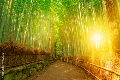 Bamboo grove at Sagano in Arashiyama in surreal sunlit. The forest is Kyoto's second most popular tourist destination and among the 100 phonetic stations in Japan. Meditative listening concept.
