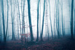 Fantasy dark blue red colored foggy forest tree landscape. Color filter effect used.  - 180002612